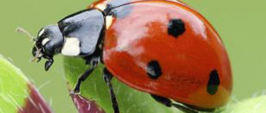 Texte : Belle la coccinelle    Evaluation
